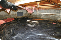 crawl-space-dirt-floor-mould-before