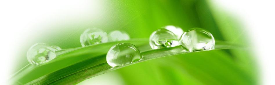 botanical-disinfectant-mr-natural-kill-mold