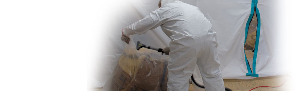 mold remediation mould removal cleaning